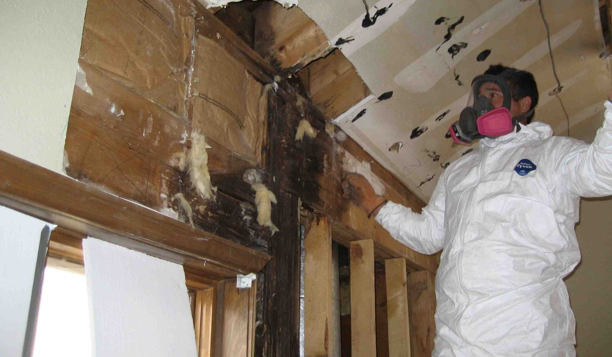 Home Mold Removal Remediation Clearwater Pinellas Park Pinellas County Able Builders, Inc
